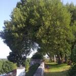 arbre-remarquable