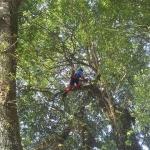 arbre-remarquable4