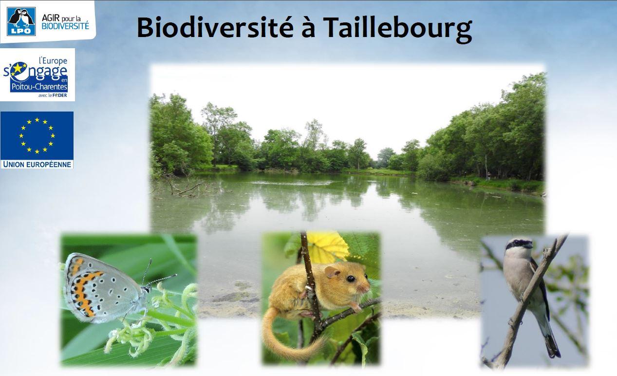 La Biodiversité à Taillebourg